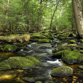 Forest and Stream in Early Summer by Geoffrey Coelho
