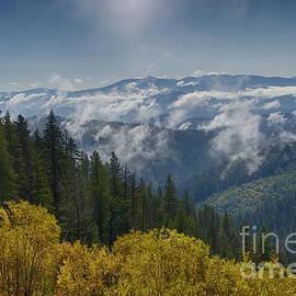 Idaho Scenic Images Linda Lantzy - Forest Breath