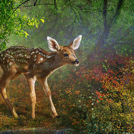 Forest Fawn by R christopher Vest