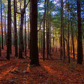 Dianne Cowen - Forest Fog Light