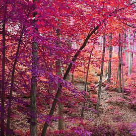 Brenda  Spittle - Forest in Pinks