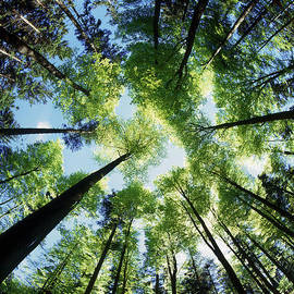 Selke Boris - Forest