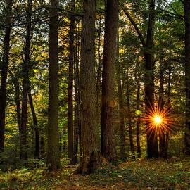 Geoffrey Coelho - Forest Sunset