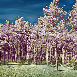 Martin Konopacki - Forest Timbers in Infrared