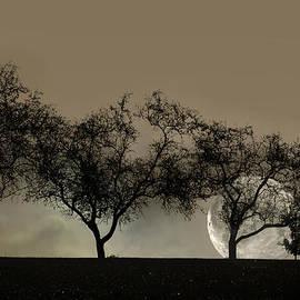 Ann Bridges - Four Trees and a Moon