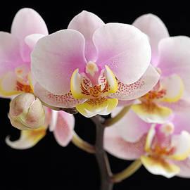 Freckled Bloom