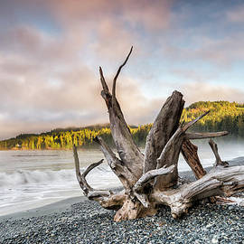 French Beach Park, Vancouver Island by Witold Skrypczak