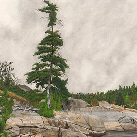 Ronald Wilkie - French River Jack Pine