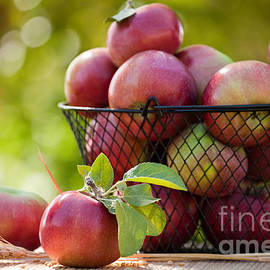 Fresh Picked Apples by Cindy Singleton