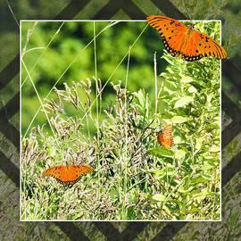 Walter Herrit - Fritillary Fly Away