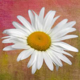 Denyse Duhaime - From My Daisy Garrden