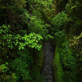 Jeff Swan - From The Tall Bridge On Eagle Creek Trail