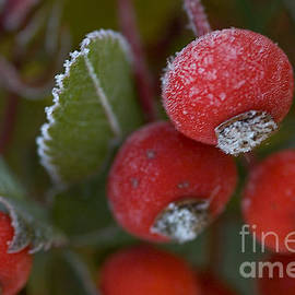 Alana Ranney - Frost On Rose Hips