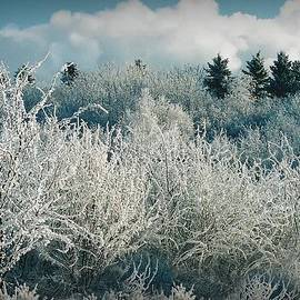 Frosted Landscape by Shirley Sirois