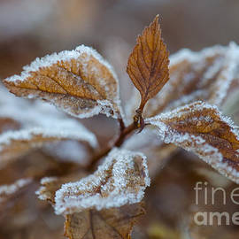 Frostig by Nicole Markmann Nelson