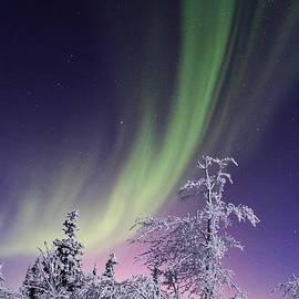 David Broome - Frosty Aurora