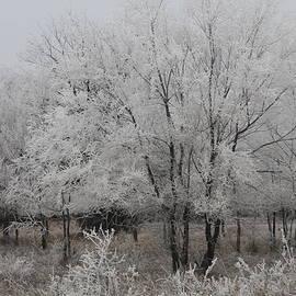 Alicia Knust - Frosty Day
