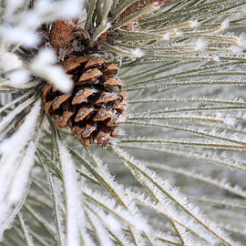 Penny Meyers - Frosty Norway Pine