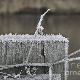Frosty Start by Jeremy Hayden