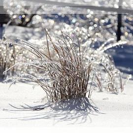 Davandra Cribbie - Frozen in Time