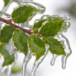 Sean Griffin - Frozen Leaves