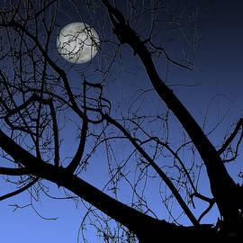Ben and Raisa Gertsberg - Full Moon And Black Winter Tree