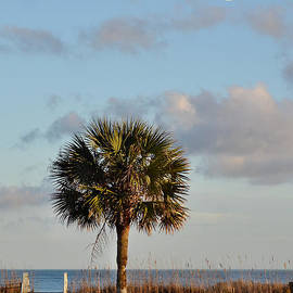 Kathy Baccari - Full Moon At Myrtle Beach State Park