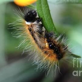 Peggy Franz - Fuzzy Caterpillar