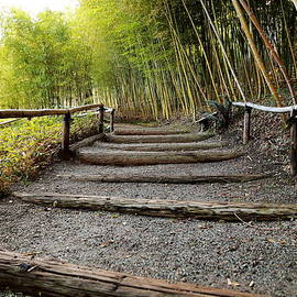 Scott Hill - Garden Path