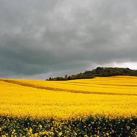 Bernard  Barcos - Gascony Field