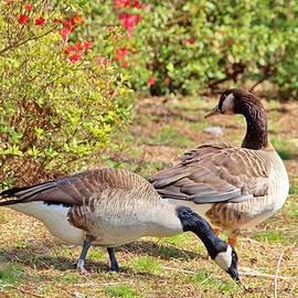 Cynthia Guinn - Geese In The Garden