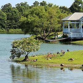 Cynthia Guinn - Geese Island