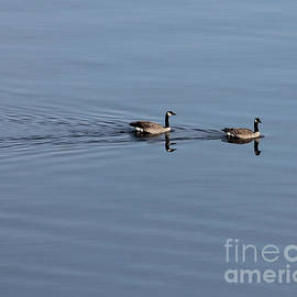 Leone Lund - Geese Reflected