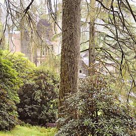 Jenny Rainbow - Gentle Light in the Magic Forest. Benmore Botanical Garden. Scotland