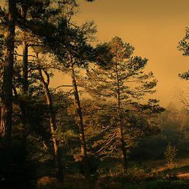 Nina Fosdick - Gentle Morning Blessings