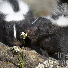 Wildlife Fine Art - Gentle