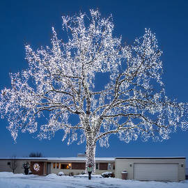Giant Lighted Oak Tree by Patti Deters
