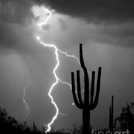 Giant Saguaro Cactus Lightning Strike Bw by James BO Insogna