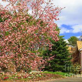 Dora Sofia Caputo Photographic Art and Design - Glimpses of Spring