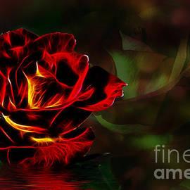 Shirley Mangini - Glowing Rose