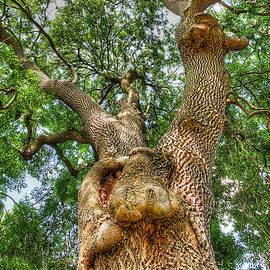 Gill Billington - Gnarled Old Tree