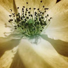 The Art Of Marilyn Ridoutt-Greene - God is Light