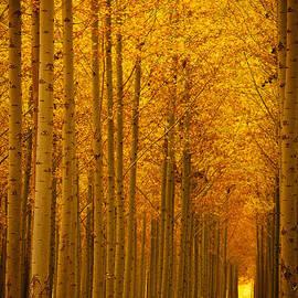 Dan Mihai - Golden Alley