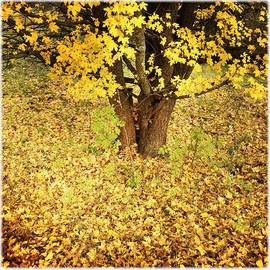 Golden and yellow autumn leaves
