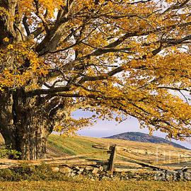 Alan L Graham - Golden Autumn