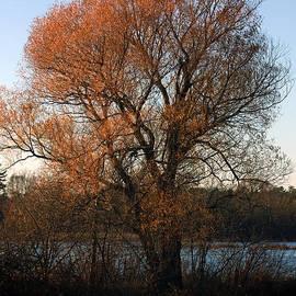 Rhonda Humphreys - Golden Autumn