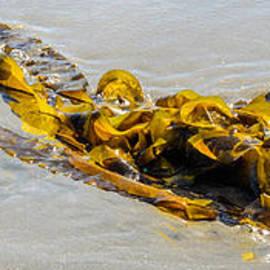 Entangled Golden Seaweed by Roxy Hurtubise