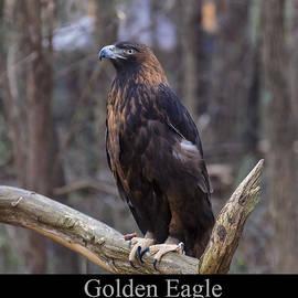 Golden Eagle by Chris Flees
