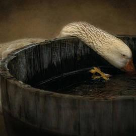 Robin-Lee Vieira - Golden Goose
