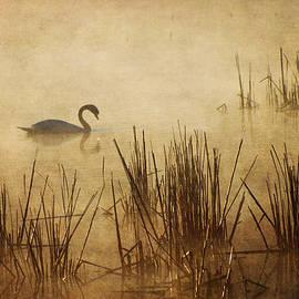 Golden Mist II by Dale Kincaid
